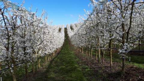 La prune en Lot-et-Garonne à l'honneur pendant ces beaux jours de début Mars
