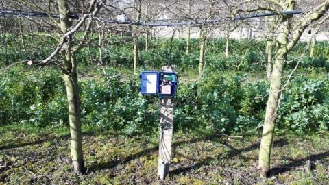 plantation en Axe, 5x2m, micro-aspersion, avec sondes WATERMARK installées à 15/30/45/60cm