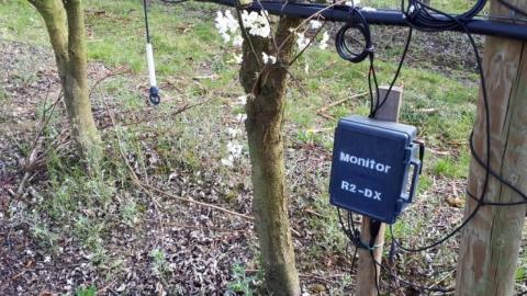 PRUNE AMERICANO-JAPONAISE  plantation en Axe, 5x2m, micro-aspersion, avec sondes WATERMARK installées à 15/30/45/60cm